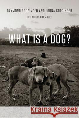 What Is a Dog? Raymond Coppinger Lorna Coppinger Alan Beck 9780226127941 University of Chicago Press