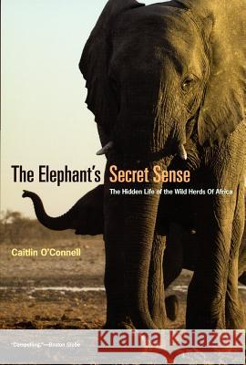 The Elephant's Secret Sense: The Hidden Life of the Wild Herds of Africa Caitlin O'Connell 9780226616742