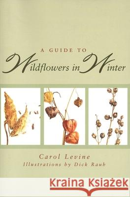 A Guide to Wildflowers in Winter: Herbaceous Plants of Northeastern North America Carol Levine Dick Rauh Dick Rauh 9780300065602