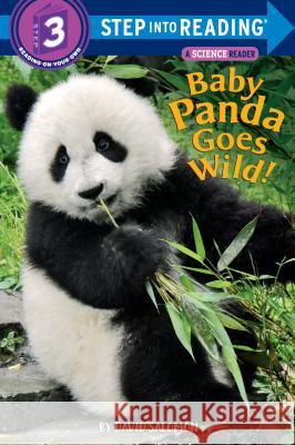 Baby Panda Goes Wild! David Salomon 9780525579168