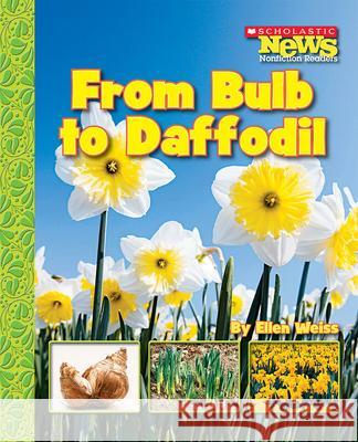 From Bulb to Daffodil Ellen Weiss 9780531187876