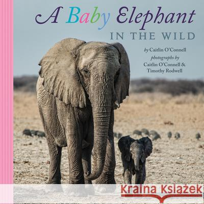 A Baby Elephant in the Wild Caitlin O'Connell Timothy Rodwell Caitlin O'Connell 9780544149441