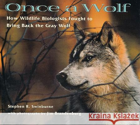 Once a Wolf: How Wildlife Biologists Fought to Bring Back the Gray Wolf Stephen R. Swinburne Jim Brandenburg 9780618111206