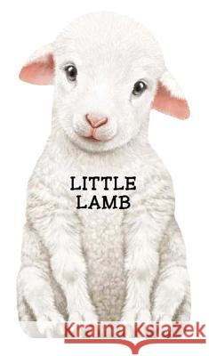 Little Lamb Giovanni Caviezel Laura Rigo 9780764165115