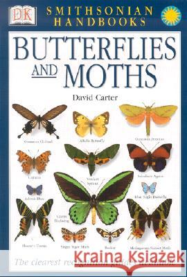 Handbooks: Butterflies & Moths: The Clearest Recognition Guide Available David J. Carter Frank Greenaway 9780789489838