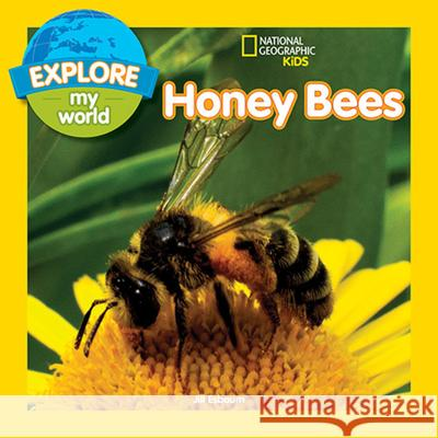 Explore My World: Honey Bees Jill Esbaum 9781426327131