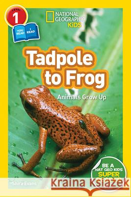 National Geographic Readers: Tadpole to Frog (L1/Co-Reader) Shira Evans 9781426332036