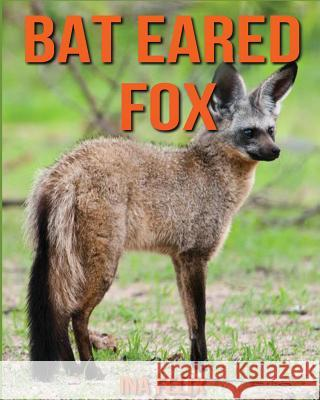 Bat Eared Fox: Children Book of Fun Facts & Amazing Photos on Animals in Nature - A Wonderful Bat Eared Fox Book for Kids Aged 3-7 Ina Felix 9781530957859