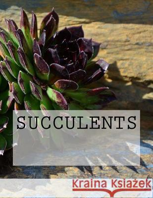 Succulents Wild Pages Press 9781547111282
