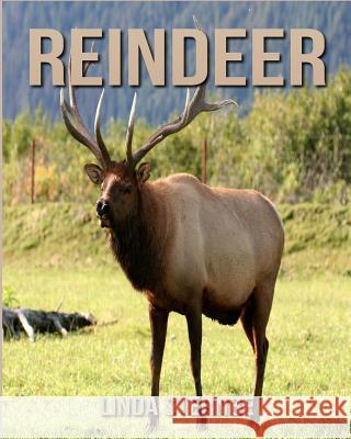 Reindeer: Amazing Pictures and Facts about Reindeer Linda Sternbe 9781548139698