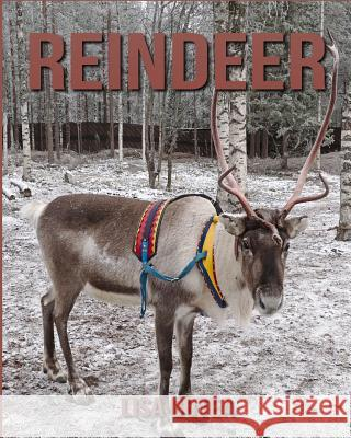 Reindeer: Amazing Pictures & Fun Facts on Animals in Nature Lisa Botea 9781548156756