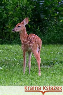 Twin Fawns in the Forest Notebook Wild Pages Press 9781548834791