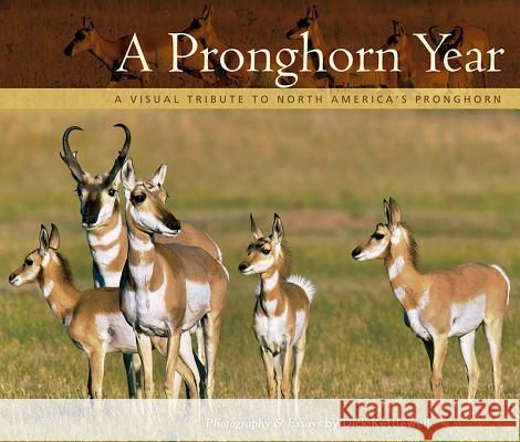 A Pronghorn Year: A Visual Tribute to North America's Pronghorn Dick Kettlewell 9781560376019