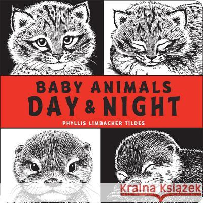 Baby Animals Day & Night Phyllis Limbacher Tildes Phylis Tildes Phyllis Limbacher Tildes 9781580896092