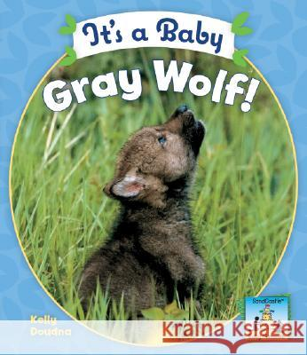 It's a Baby Gray Wolf! Kelly Doudna 9781604530247