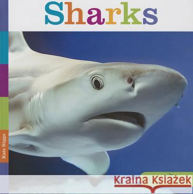 Sharks Kate Riggs 9781608183425 Creative Education