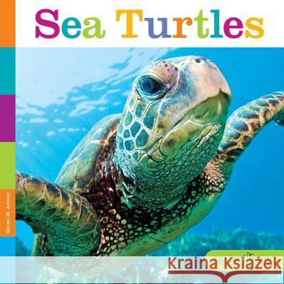 Sea Turtles Quinn M. Arnold 9781608187805 Creative Education