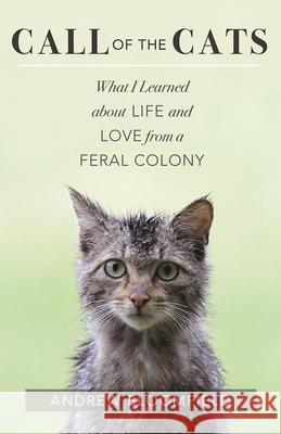 Call of the Cats: What I Learned about Life and Love from a Feral Colony Andrew Bloomfield 9781608683987 New World Library