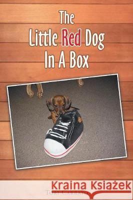 The Little Red Dog in a Box Tori Carrato 9781640795273