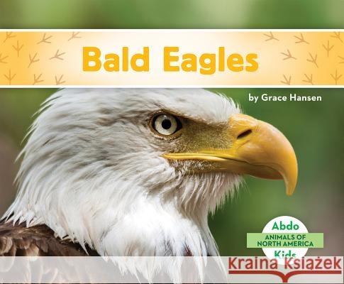 Bald Eagles Grace Hansen 9781680801088