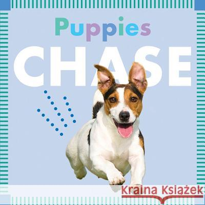 Puppies Chase Rebecca Glaser 9781681521961