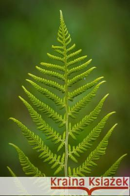Fern Notebook Wild Pages Press 9781718738508