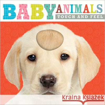 Touch and Feel Baby Animals Make Believe Ideas 9781783931538 Make Believe Ideas
