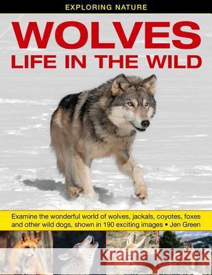 Exploring Nature: Wolves - Life in the Wild: Examine the Wonderful World of Wolves, Jackals, Coyotes, Foxes and Other Wild Dogs, Shown in 190 Exciting Jen Green 9781861473950