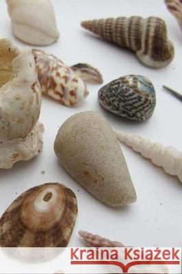 My Shell Collection Notebook Wild Pages Press 9781975869816