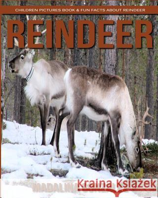 Reindeer: Children Pictures Book & Fun Facts about Reindeer Madalina Gonzalez 9781979254397