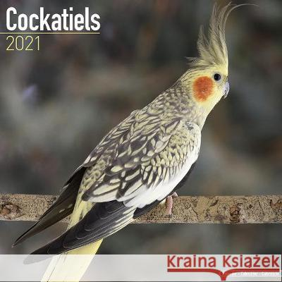Cockatiels 2021 Wall Calendar  9781785809583 Avonside Publishing Ltd - książka