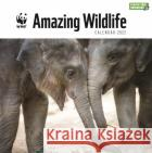 WWF Amazing Wildlife Square Wall Calendar 2022  9781529815771 CAROUSEL PLASTIC FREE 2022asdasd