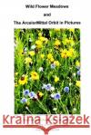 Wild Flower Meadows and the Arcelormittal Orbit in Pictures Llewelyn Pritchar 9781493759644 Createspace